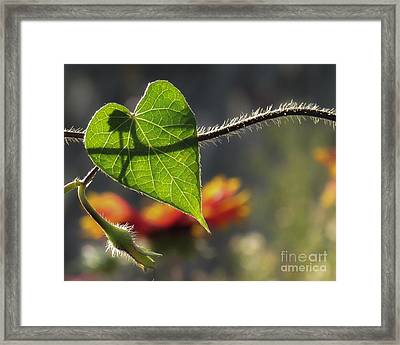 Heart Leaf 1 Framed Print