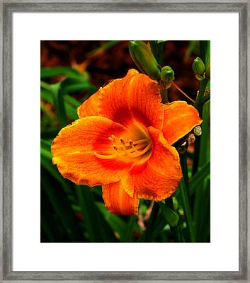 Heart Lily Framed Print by Paul Anderson