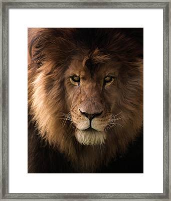 Heart Of A Lion - Wildlife Art Framed Print