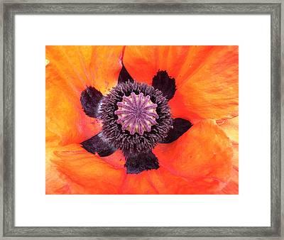 Heart Of A Poppy Framed Print