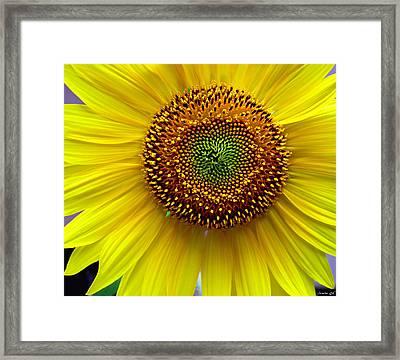 Framed Print featuring the photograph Heart Of A Sunflower by JoAnn Lense
