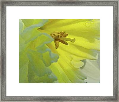 Framed Print featuring the photograph Heart Of Daffodil by Larry Bishop
