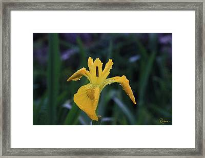 Heart Of Iris Framed Print