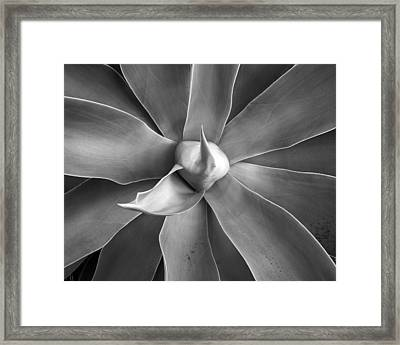 Heart Of The Matter Framed Print