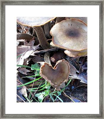 Framed Print featuring the photograph Heart Of The Matter Smaller Pic by Marie Neder