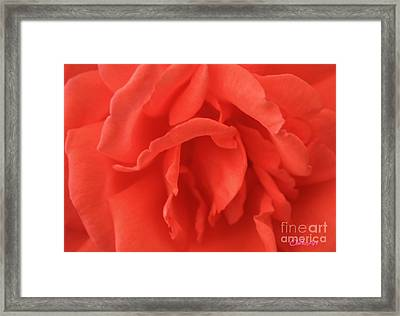Yoni Rose Framed Print