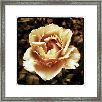 Heart Rose. Imagine Your Heart Is A Framed Print by Mr Photojimsf