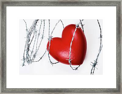 Heart Shape Surrounded With Barbed Wire Framed Print