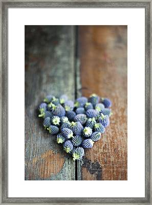 Heart Shaped Blue Thistle Buds Framed Print