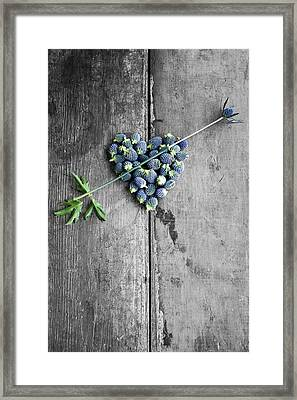 Heart Shaped Blue Thistle Buds With Arrow Stem Framed Print