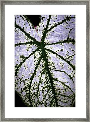 Framed Print featuring the photograph Heart Shaped Leaf by Catherine Lau