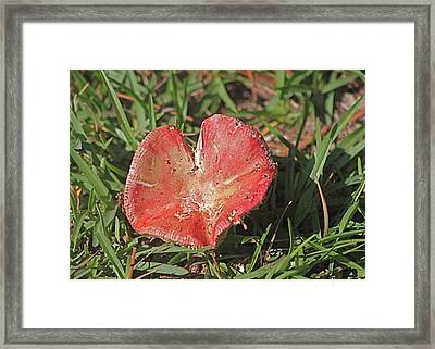 Heart-shaped Mushroom Framed Print