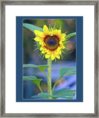 Heart Shaped Sunflower Framed Print