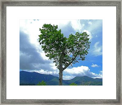 Heart Shaped Tree Framed Print