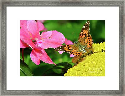 Heart To Heart Framed Print by Robyn King