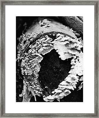 Heart Toadstool Framed Print