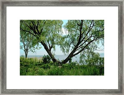 Heart Tree On Lake Saint Clair Framed Print