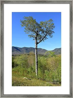 Heart Tree Spring  Framed Print