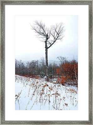 Heart Tree Winter  Framed Print by Catherine Reusch Daley