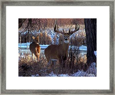 Heartbeat Of The Wild Framed Print by Bill Stephens