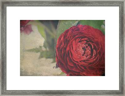 Heartfelt  Framed Print