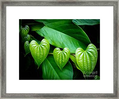 Hearts In Nature Framed Print