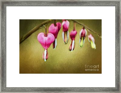 Hearts Of Spring Framed Print by Darren Fisher