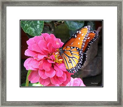 Hearts On Her Wings Framed Print by Trina Prenzi