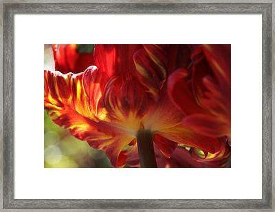 Heat Framed Print by Connie Handscomb