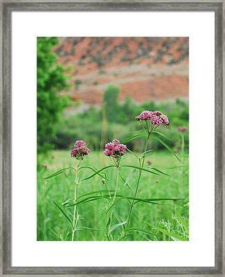 Heat Retreat Framed Print