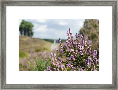 Heather Framed Print by Rainer Kersten