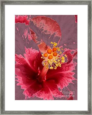 Heather Tinged Mallow  Framed Print