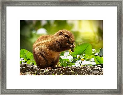 Framed Print featuring the photograph Heathy Breakfast by Christine Sponchia