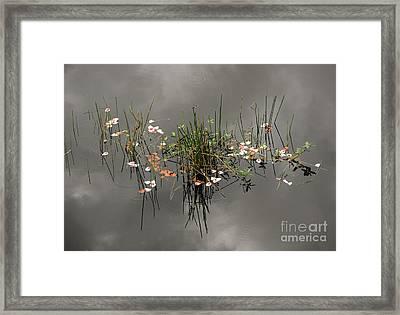 Heaven In The Swamp Framed Print