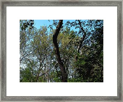 Heaven Framed Print by Mindy Newman