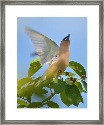 Heaven Framed Print by Toshihide Takekoshi