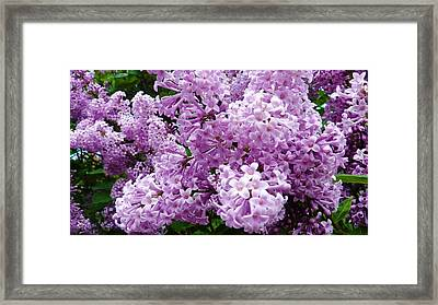 Heavenly Beauty Framed Print