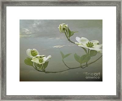 Heavenly Dogwood Framed Print by Skip Willits