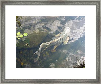 Heavenly Fish Framed Print