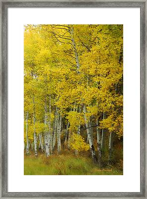 Heavenly Light Framed Print by Donna Blackhall