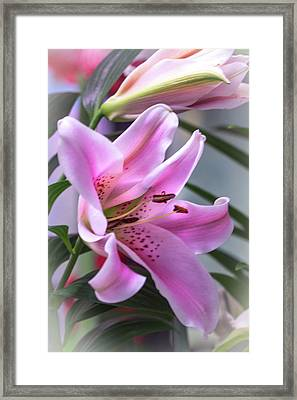 Heavenly Pink Lily Framed Print by Mother Nature