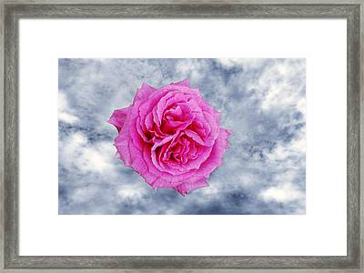 Heavenly Rose Framed Print by Terence Davis