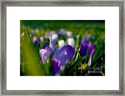 Heaven's Garden Framed Print
