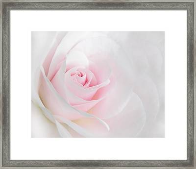 Heaven's Light Pink Rose Flower Framed Print by Jennie Marie Schell