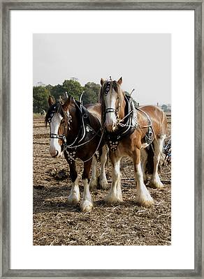 Heavy Horses Framed Print by Gerry Walden