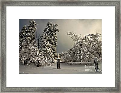Heavy Laden Framed Print by Lois Bryan