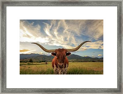 Heber Longhorn Sunset Framed Print