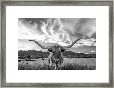 Heber Valley Longhorn Framed Print by Johnny Adolphson
