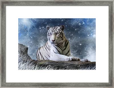 Hector Framed Print by Julie L Hoddinott