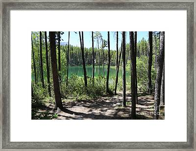 Hector Lake Through The Trees Framed Print